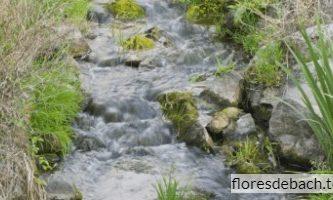 Comprar flor de Bach Agua de Roca - Rock water