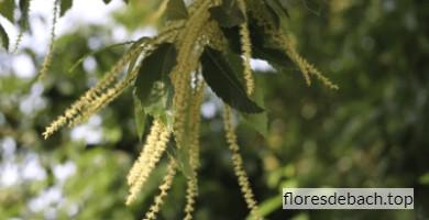Comprar Flores de Bach Sweet Chestnut online