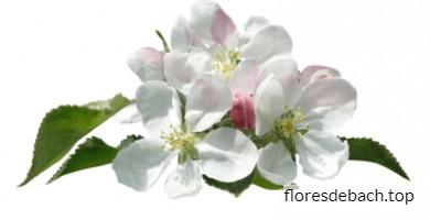Comprar la flor de Bach Manzano Silvestre - Crab Apple