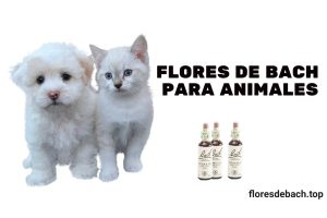 flores de bach para animales, mascotas, perros y gatos
